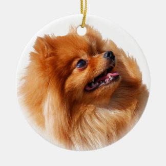 Ornamento De Cerâmica Spitz de Pomeranian
