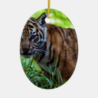 Ornamento De Cerâmica Tigre Cub de Sumatran dos alugueres