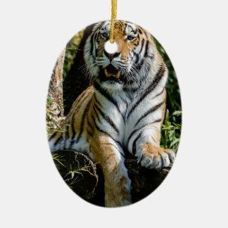 Ornamento De Cerâmica Tigre dos alugueres em Muenster
