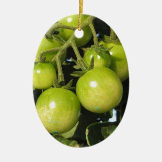 Ornamento De Cerâmica Tomates verdes que penduram na planta no jardim