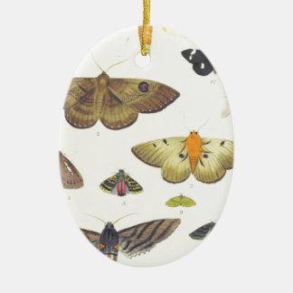 Ornamento De Cerâmica Traças e borboletas de Nova Zelândia