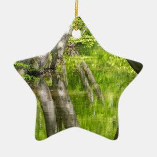 Ornamento De Cerâmica Troncos de árvore da faia com água na floresta do