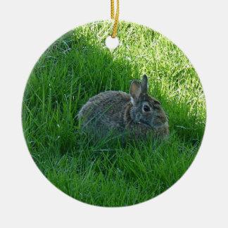 Ornamento De Cerâmica Um coelho obscuro