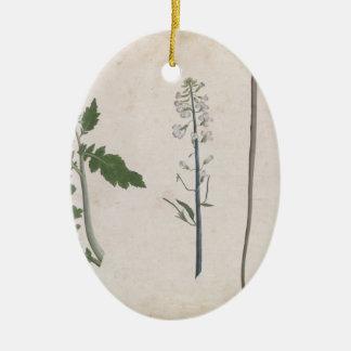 Ornamento De Cerâmica Uma planta de rabanete, uma semente, e uma flor