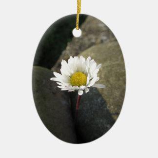 Ornamento De Cerâmica Única flor da margarida branca entre as pedras