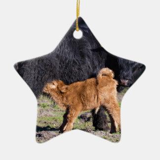 Ornamento De Cerâmica Vaca e jovens escoceses pretos da mãe do escocês