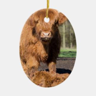 Ornamento De Cerâmica Vaca escocesa do escocês da mãe perto da vitela