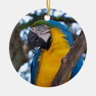 Ornamento De Cerâmica Verde amarelo e Macaw tropical azul