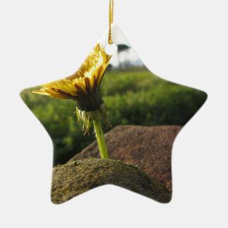 Ornamento De Cerâmica Wildflower amarelo que cresce em pedras no por do