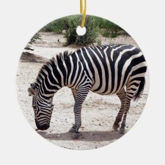 Ornamento De Cerâmica Zebra africana no jardim zoológico