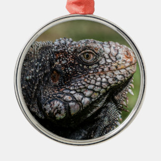 Ornamento De Metal 1920px-Iguanidae_head_from_Venezuela