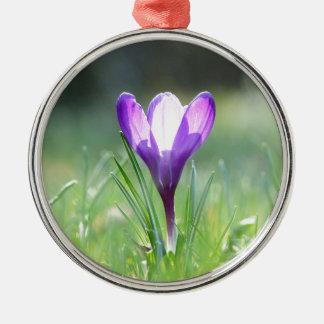 Ornamento De Metal Açafrão roxo no primavera 03,3