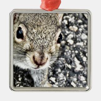 Ornamento De Metal Ascendente próximo do esquilo!