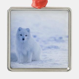 Ornamento De Metal branco do poder dos animais de Islândia