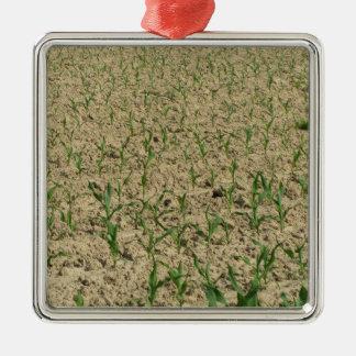Ornamento De Metal Campo do milho do milho verde na fase inicial