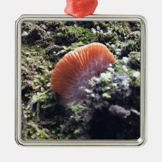 Ornamento De Metal Cogumelo tormentoso da explosão dos Mycelia
