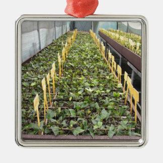 Ornamento De Metal Cultivo da estufa da flor do japonica da camélia