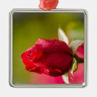 Ornamento De Metal Design ascendente próximo da rosa vermelha
