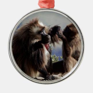 Ornamento De Metal Dois babuínos do gelada (gelada de Theropithecus)
