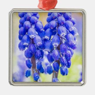 Ornamento De Metal Dois jacintos de uva azuis no primavera