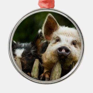 Ornamento De Metal Dois porcos - fazenda de porco - fazendas da carne