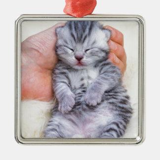 Ornamento De Metal Encontro recém-nascido do gato sonolento à