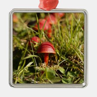 Ornamento De Metal Escarlate dos fungos da capa, coccinea do