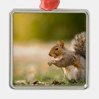 Ornamento De Metal Esquilo com fome