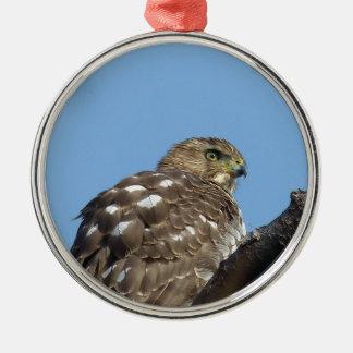 Ornamento De Metal falcão