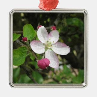 Ornamento De Metal Flor cor-de-rosa da maçã no primavera. Toscânia,