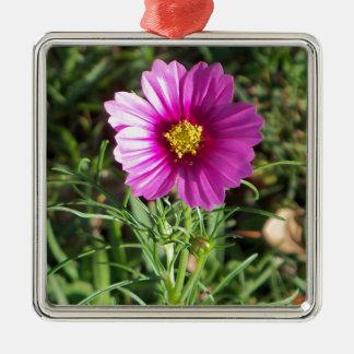Ornamento De Metal Flor cor-de-rosa escura da margarida do cosmos