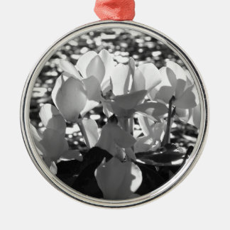 Ornamento De Metal Flores brancas do cyclamen de Backlits no fundo