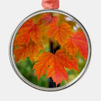 Ornamento De Metal Folhas da árvore de bordo no close up da cor da