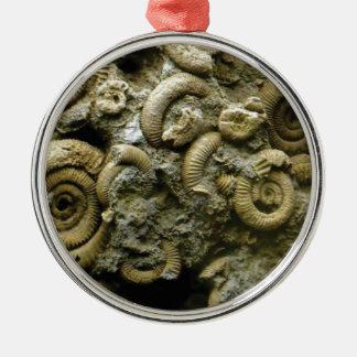 Ornamento De Metal fósseis encaixados dos caracóis