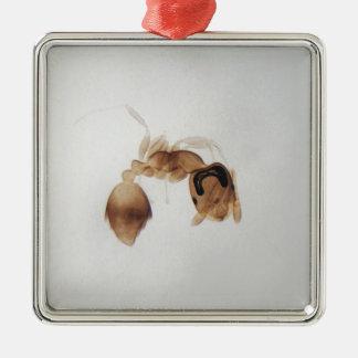 Ornamento De Metal Foto do microscópio de uma formiga