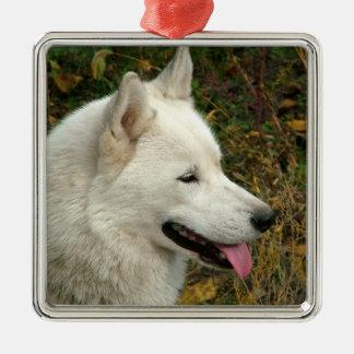 Ornamento De Metal Fotografia do cão do Malamute do Alasca