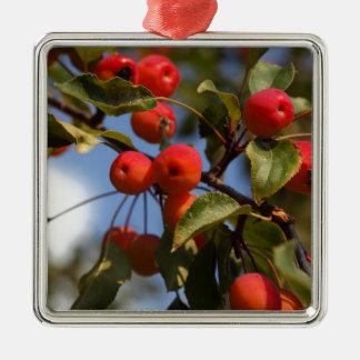 Ornamento De Metal Frutas de uma árvore de maçã selvagem
