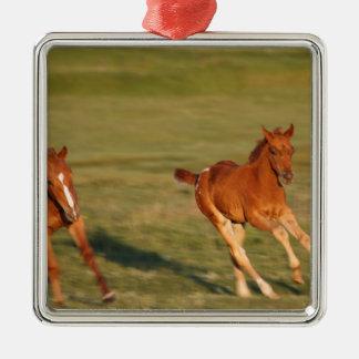 Ornamento De Metal Funcionamento dos cavalos selvagem