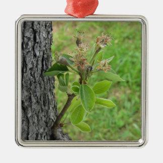 Ornamento De Metal Galho da árvore de pera com os botões no primavera