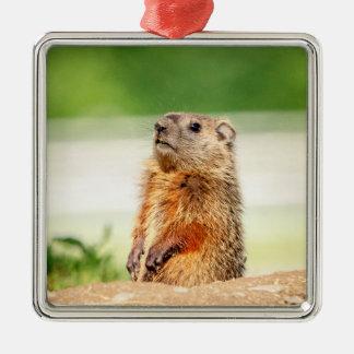 Ornamento De Metal Groundhog novo