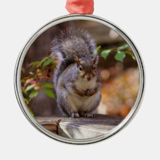 Ornamento De Metal Implorando o esquilo