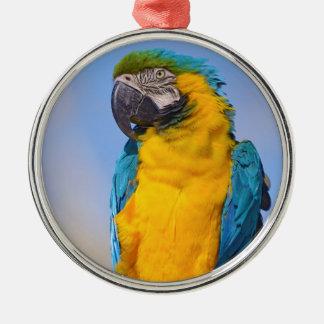 Ornamento De Metal Macaw de Gelbbrustara na vara