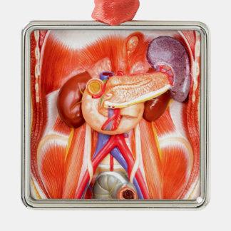 Ornamento De Metal Modelo humano do torso com órgãos