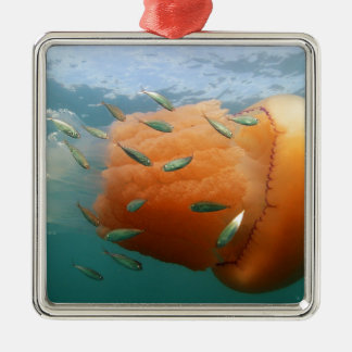 Ornamento De Metal Natações das medusa do tambor com cavala