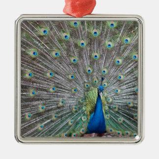 Ornamento De Metal Pavão colorido