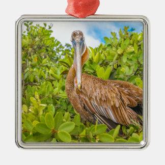 Ornamento De Metal Pelicano grande na árvore, Galápagos, Equador