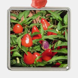 Ornamento De Metal Pimentas de pimentão vermelho que penduram na