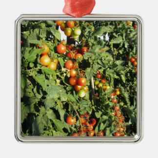 Ornamento De Metal Plantas de tomate que crescem no jardim