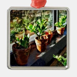 Ornamento De Metal Plantas do jade na estufa