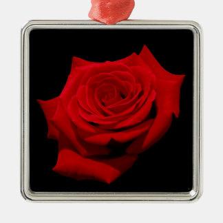 Ornamento De Metal Rosa vermelha no fundo preto